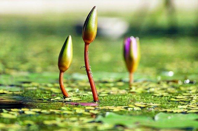 植物の成長と萌芽
